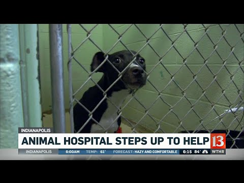 Animal hospital steps up to help