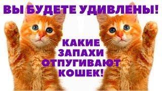 Какой запах отпугивает кошек ??? Вы будете удивлены !!!