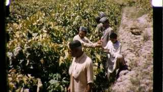 Afghanistan in the 1950's - Farming