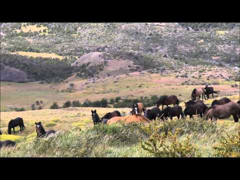 Tracking Wild Horses in Patagonia