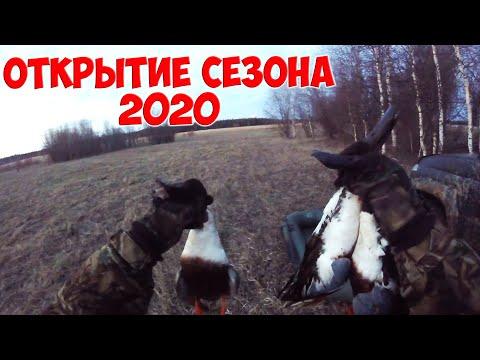 Открытие весеннего сезона охоты на уток 2020