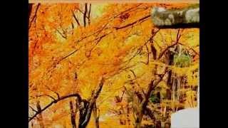 2013.11.28 奈良の桜井にある談山(たんざん)神社の秋の紅葉はかなり有...
