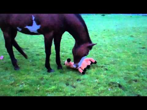 My Horse Thinks Stuffed Animal Is Her Baby Youtube