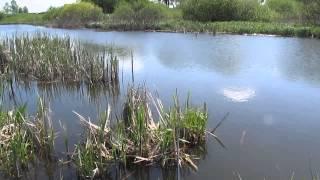 видео наживка для поплавочной удочки, бойлы, естественные наживки