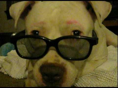 Cody the Dog ~ I Wear My Sunglasses =)