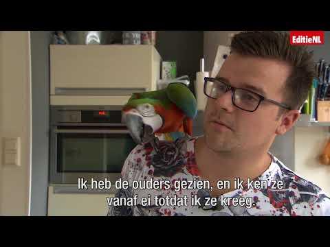 Kun je een papegaai als huisdier houden? – EDITIE NL