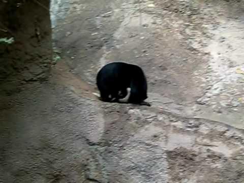 zoo san diego der kleinste b r der welt youtube. Black Bedroom Furniture Sets. Home Design Ideas