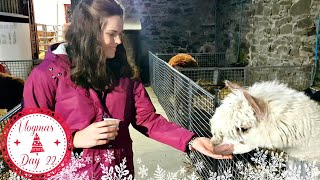 Reindeer, Alpacas and Much More - Ark Open Farm | Vlogmas Day 22 | Jenny E