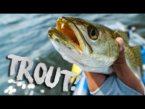 Fishing Grass Flats For Speckled Trout In Florida!