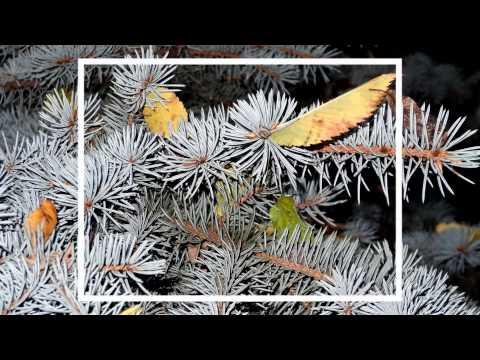 текст песни гансэлло летом и зимой. Песня Летом и зимой (2013-кусман) - Гансэлло и ... скачать mp3 и слушать онлайн