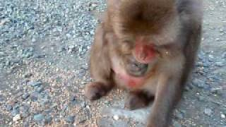 (Monkey blog) http://osaruosaru.blogspot.com/2010/02/blog-post.html...