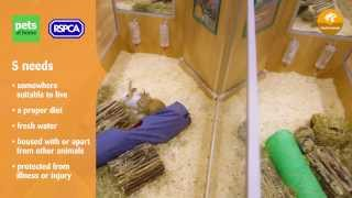 Title: Making Our Pets At Home -- Small Animal
