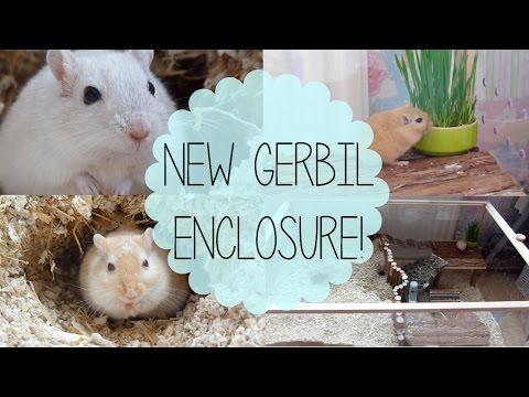Living World Eco Habitat Cage Tour Youtube