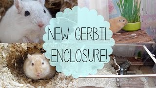 New Gerbil Enclosure!