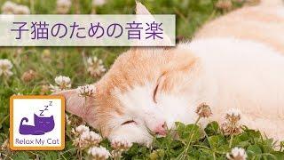 猫、子猫のための音楽、あなたの猫カームを保つのを助けます