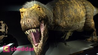 New Exhibit Unveils A More Accurate T-Rex - Cheddar Explores