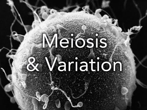 A2 Biology: Meiosis and Variation