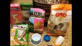 Покупки из Зоомагазина для крыс?!! + показываю любимцев!!!