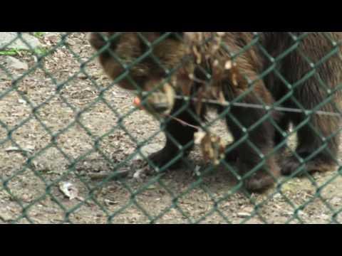 2017,04,09 Bärenpark Worbis -Heimat für gerettete Tiere