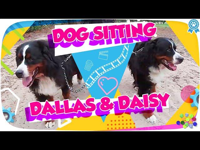 Daisy Dallas  - Dog-Sitting