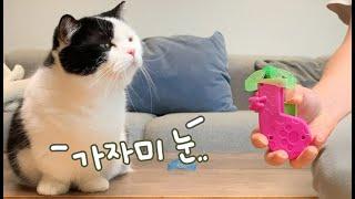 신문물 앞에 가자미 눈이 되어버린 관종고양이~