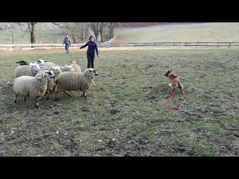 Mia u oveček