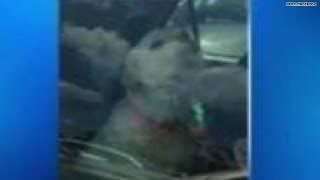 Watch: Internet comes to aid of dog locked in hot car