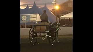 Carriage Driving with Tim Morrell of Moreland Farms West Brookfield, Massachusetts