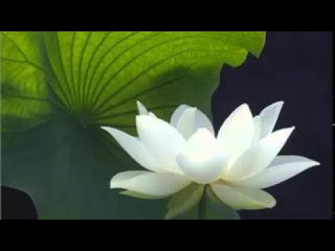 Basic meditation technique practicing mindfulness