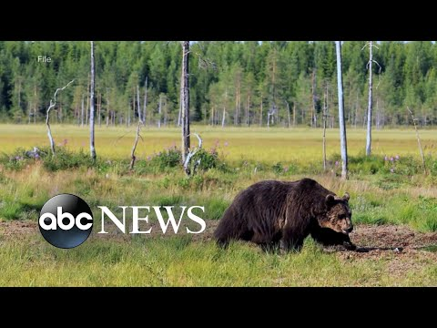 Man recovering after grizzly bear attack
