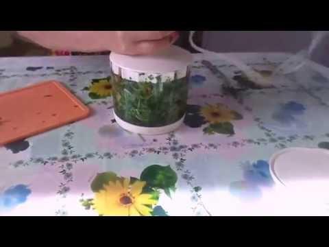 Приготовление ледяных кубиков из петрушки для омолаживания кожи лица и шеи в домашних условиях.