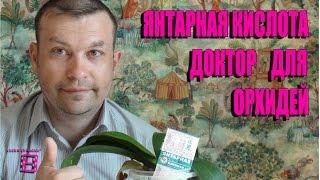 ЯНТАРНАЯ КИСЛОТА - ЗЕЛЕНЫЙ ДОКТОР ДЛЯ ОРХИДЕЙ. Орхидеи в домашних условиях. #Орхидеи