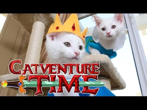 Adventure Time (Cute Kitten Edition)