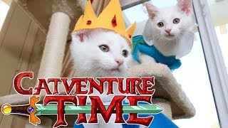 Repeat youtube video Adventure Time (Cute Kitten Edition)
