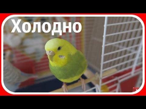 Что делать если попугай мёрзнет || Как согреть попугая пока нет отопления
