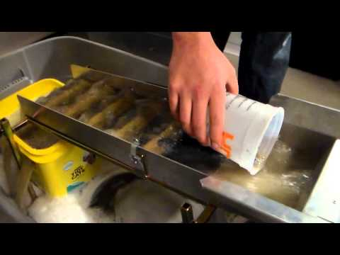 Garage Gold: Sluicing Paydirt - Alaskan Raw
