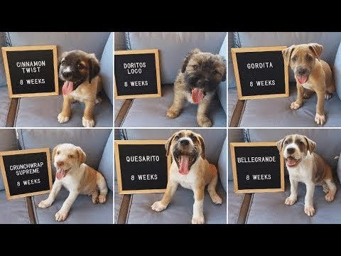 stray-dog-who-was-hours-away-from-being-put-down-gives-birth-to-eight-adorable-puppies