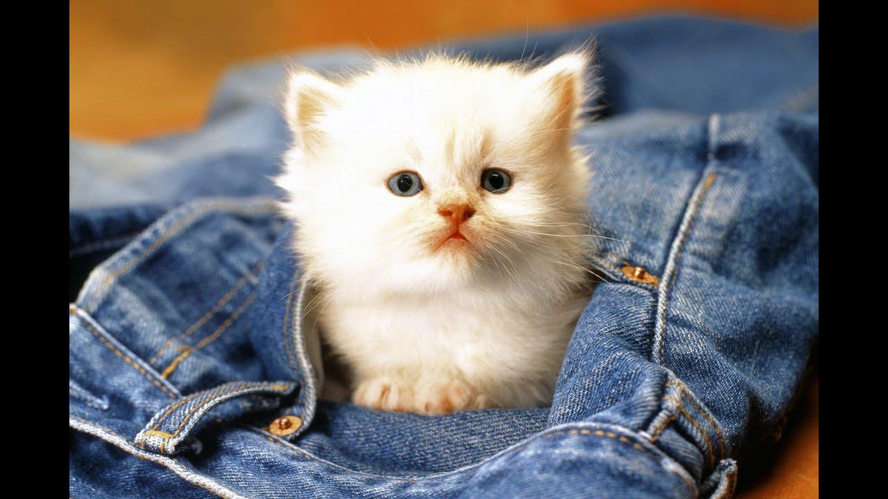 кошка картинка смешная