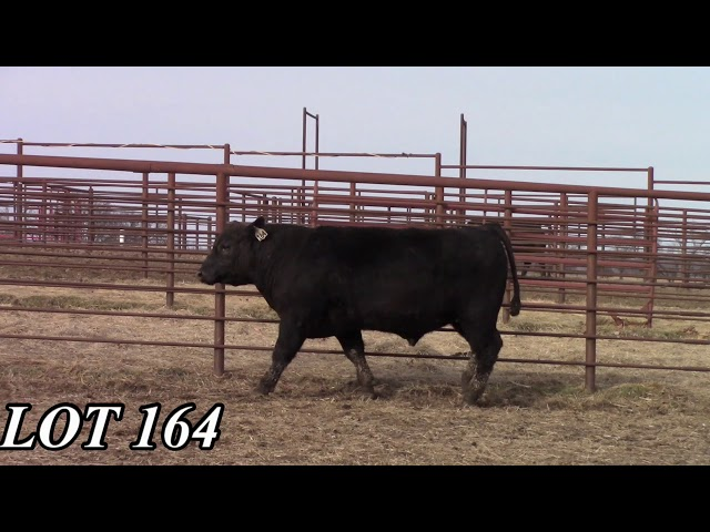 Mead Angus Farms Lot 164