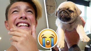 THE BIGGEST SURPRISE OF MY LIFE!! (New Puppy) *very emotional*