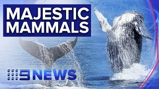 whale-watchers-delighted-coast-news-australia