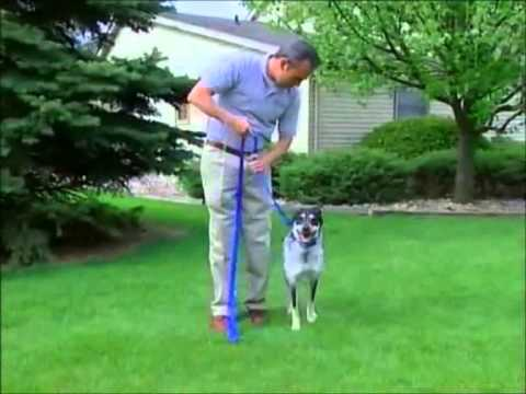 PetSafe® Dog Training with a Static Remote Trainer