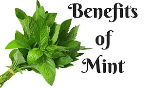 8 Health Benefits of Mint [ Science Based ]