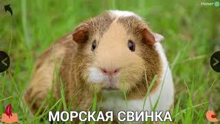 Изучаем домашних животных - Study Pets.