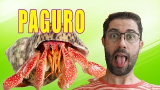 كيفية إنشاء Paguro في الحوض البحري