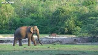 Sri Lanka vakantie   Kuoni Reizen