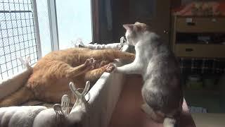 猫の小競り合い thumbnail
