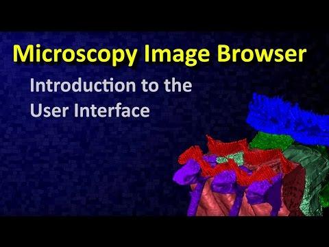 Introduction to the user interface of Microscopy Image Browser