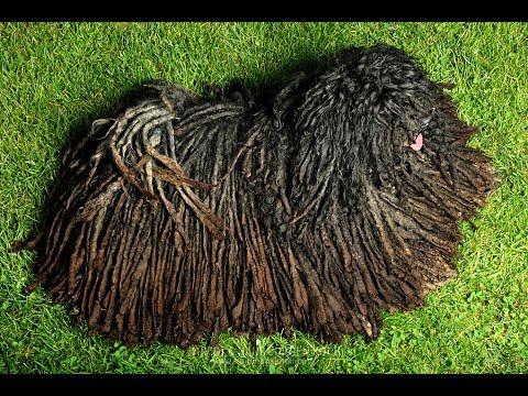 Top 10 Weirdest Dog Breeds you have ever Seen