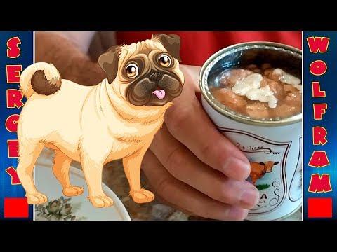 Реакция собаки на тушёнку за 20 рублей